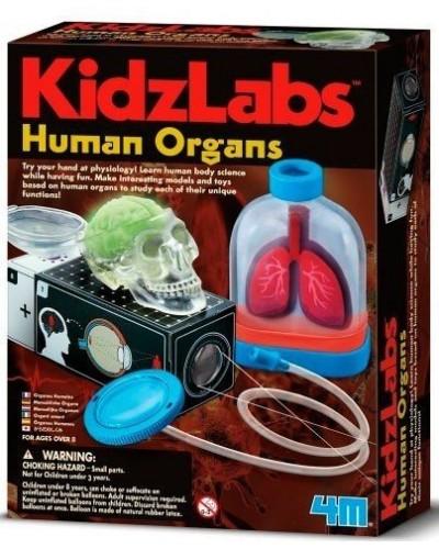Людські органи. Дитяча лабораторія. Арт 00-03374